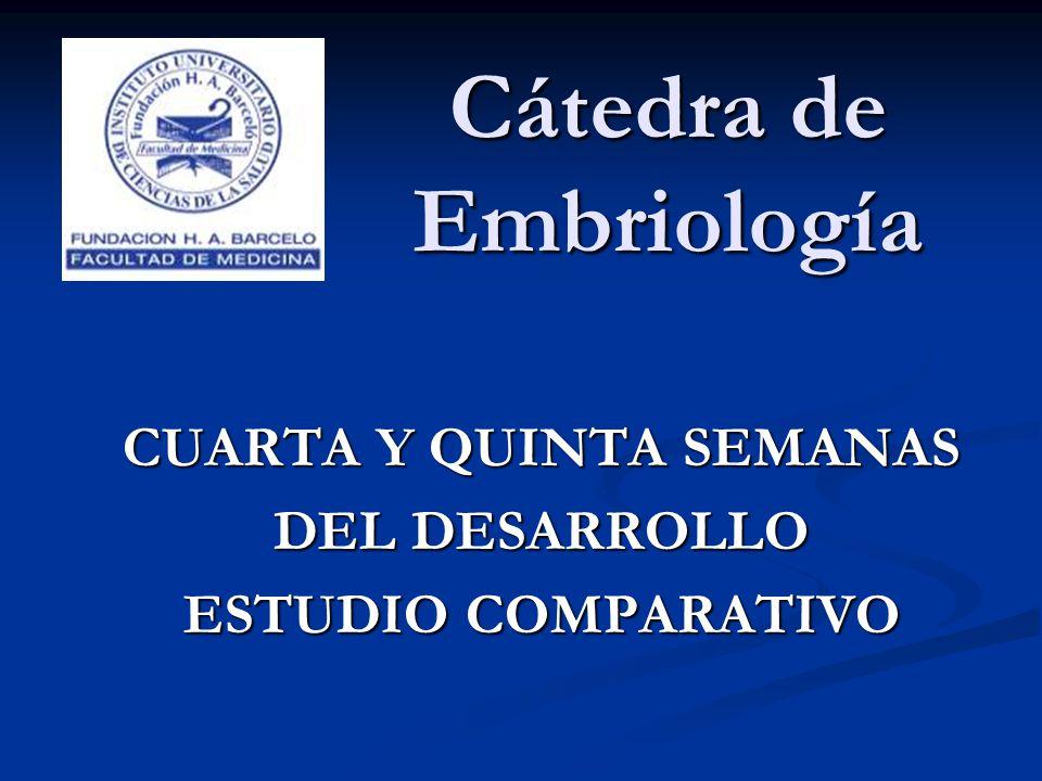 Cátedra de Embriología