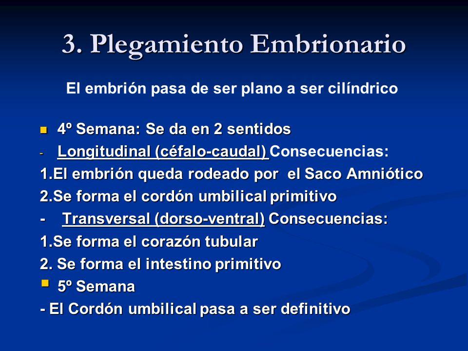 3. Plegamiento Embrionario