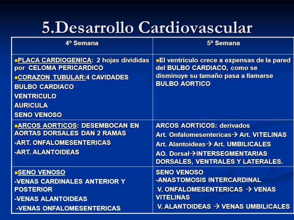 5.Desarrollo Cardiovascular