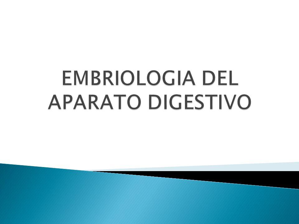 EMBRIOLOGIA DEL APARATO DIGESTIVO