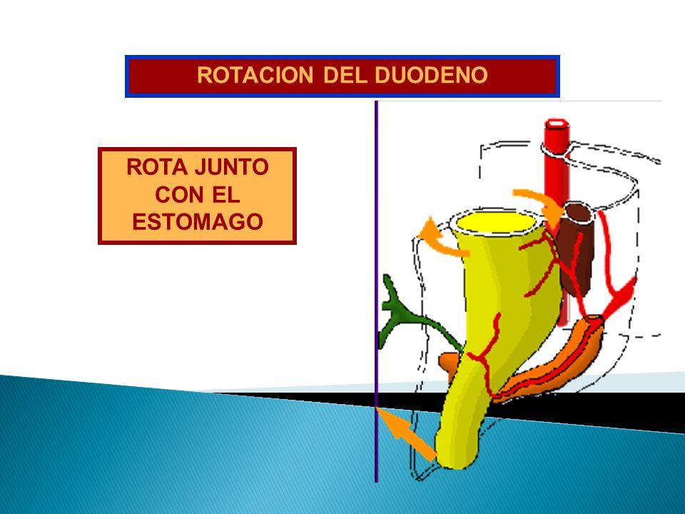 ROTA JUNTO CON EL ESTOMAGO