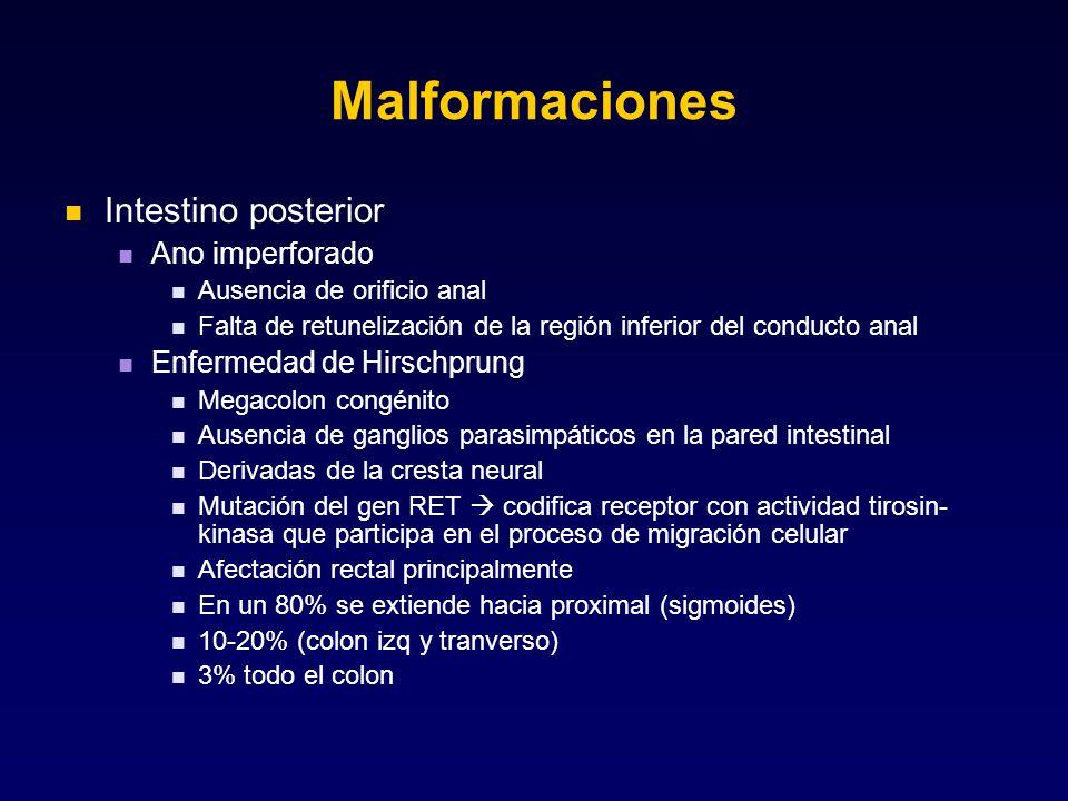 Malformaciones Intestino posterior Ano imperforado