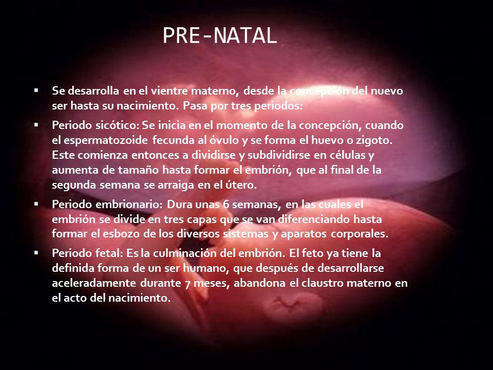 PRE-NATAL Se desarrolla en el vientre materno, desde la concepción del nuevo ser hasta su nacimiento. Pasa por tres periodos: