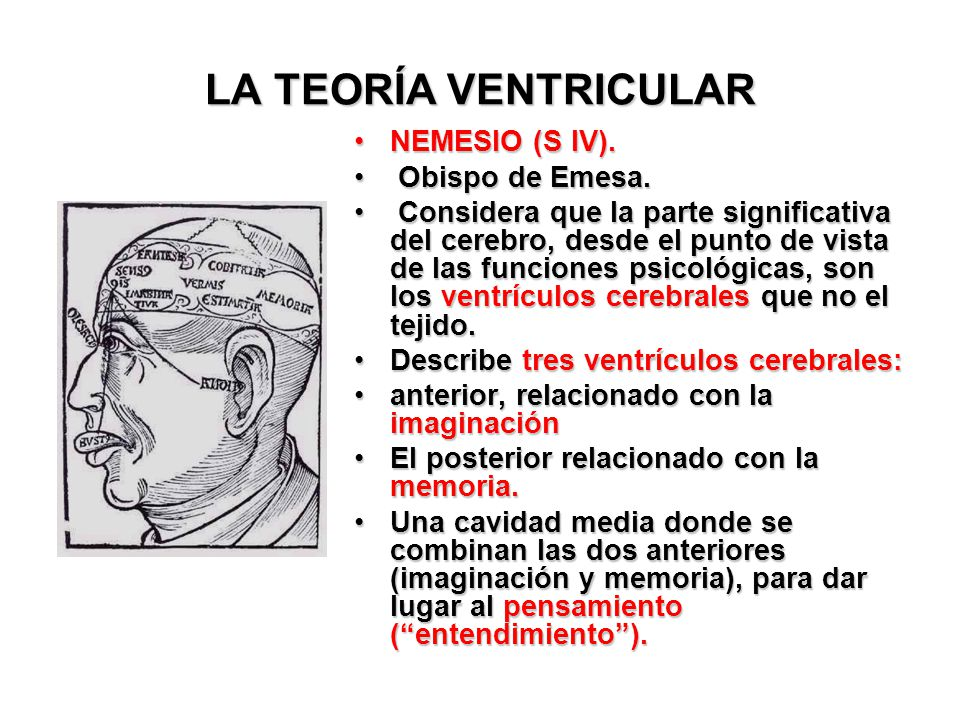 LA TEORÍA VENTRICULAR NEMESIO (S IV). Obispo de Emesa.