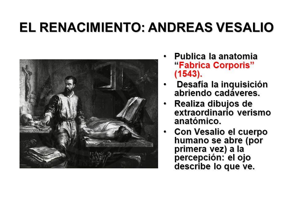 EL RENACIMIENTO: ANDREAS VESALIO