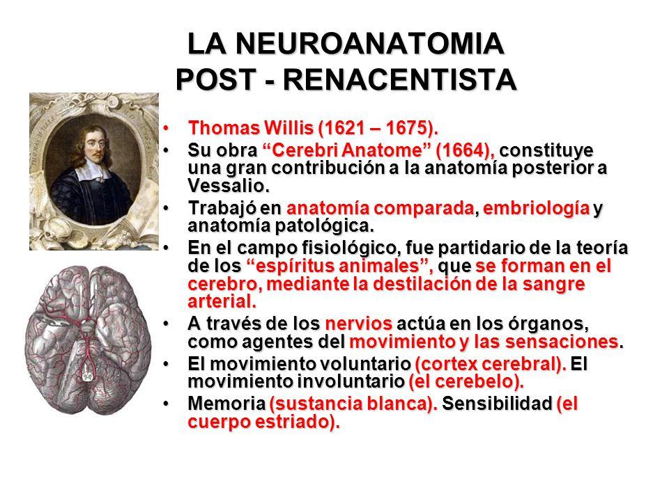 LA NEUROANATOMIA POST - RENACENTISTA
