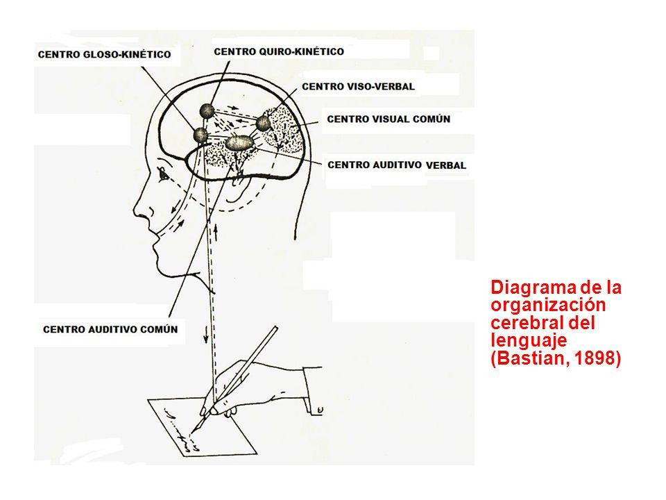 Diagrama de la organización cerebral del lenguaje (Bastian, 1898)