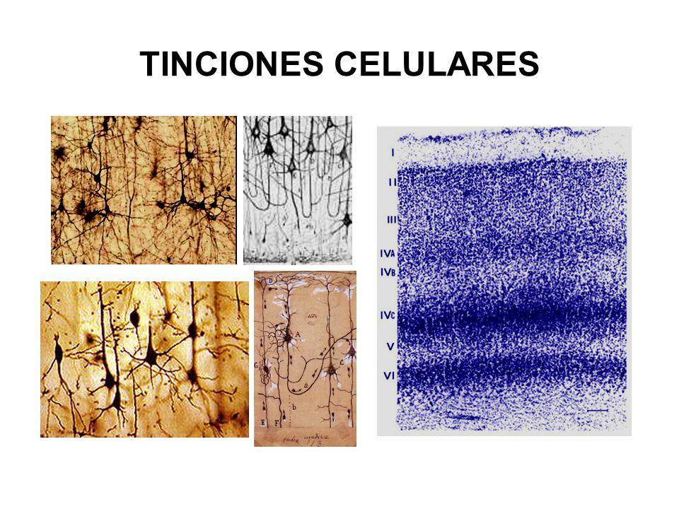 TINCIONES CELULARES