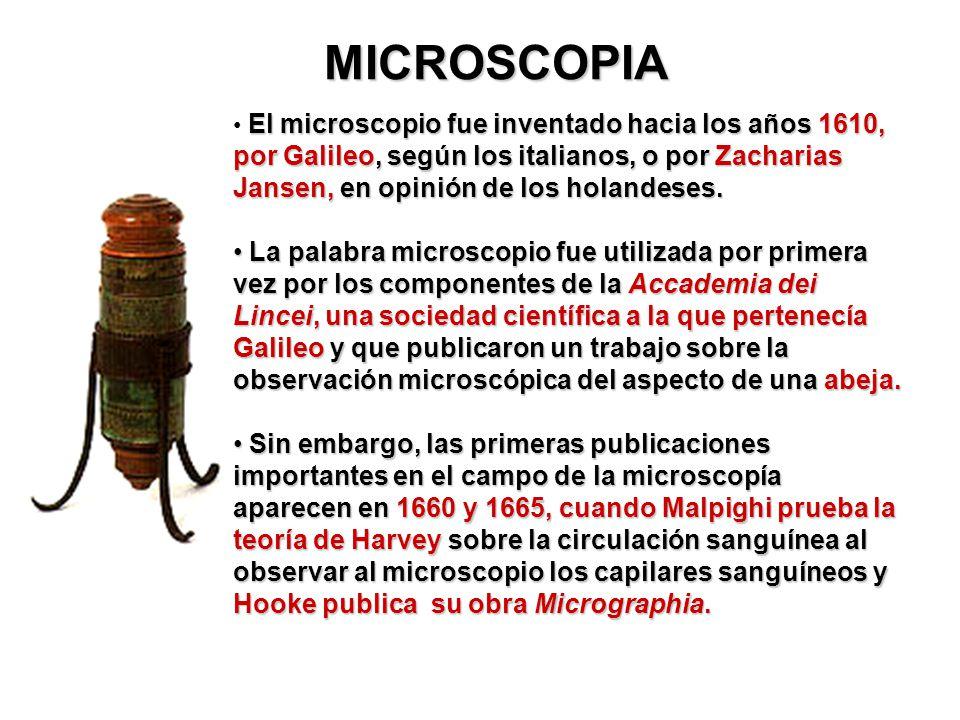 MICROSCOPIA El microscopio fue inventado hacia los años 1610, por Galileo, según los italianos, o por Zacharias Jansen, en opinión de los holandeses.