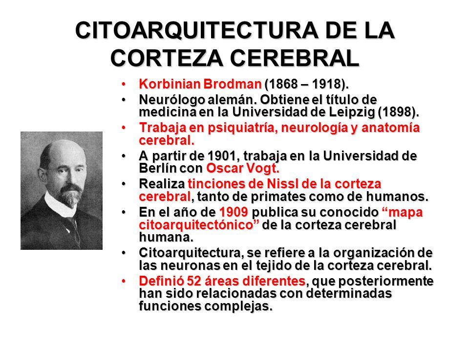 CITOARQUITECTURA DE LA CORTEZA CEREBRAL