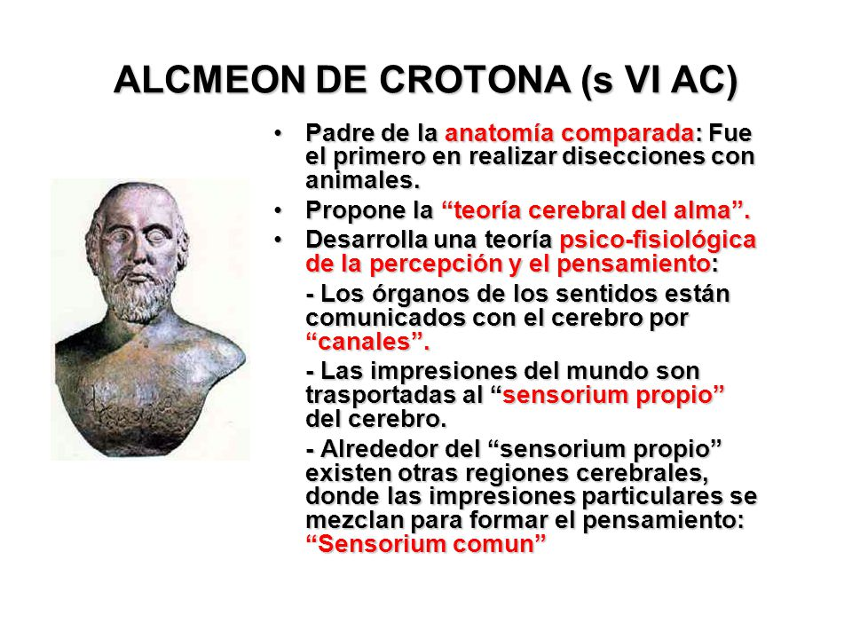 ALCMEON DE CROTONA (s VI AC)