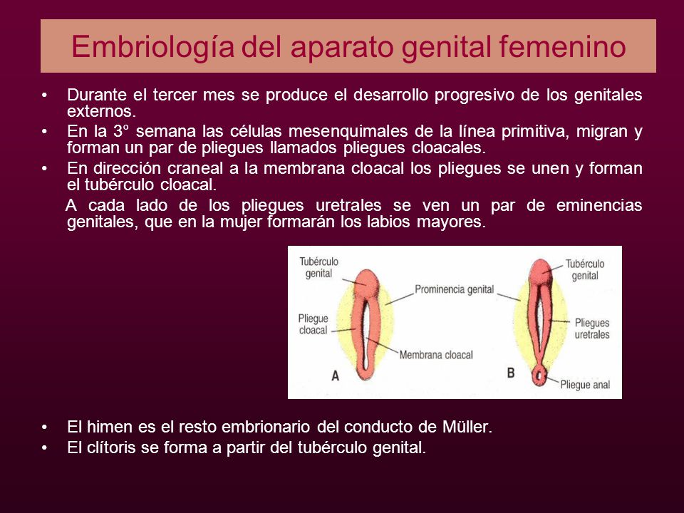 Embriología del aparato genital femenino