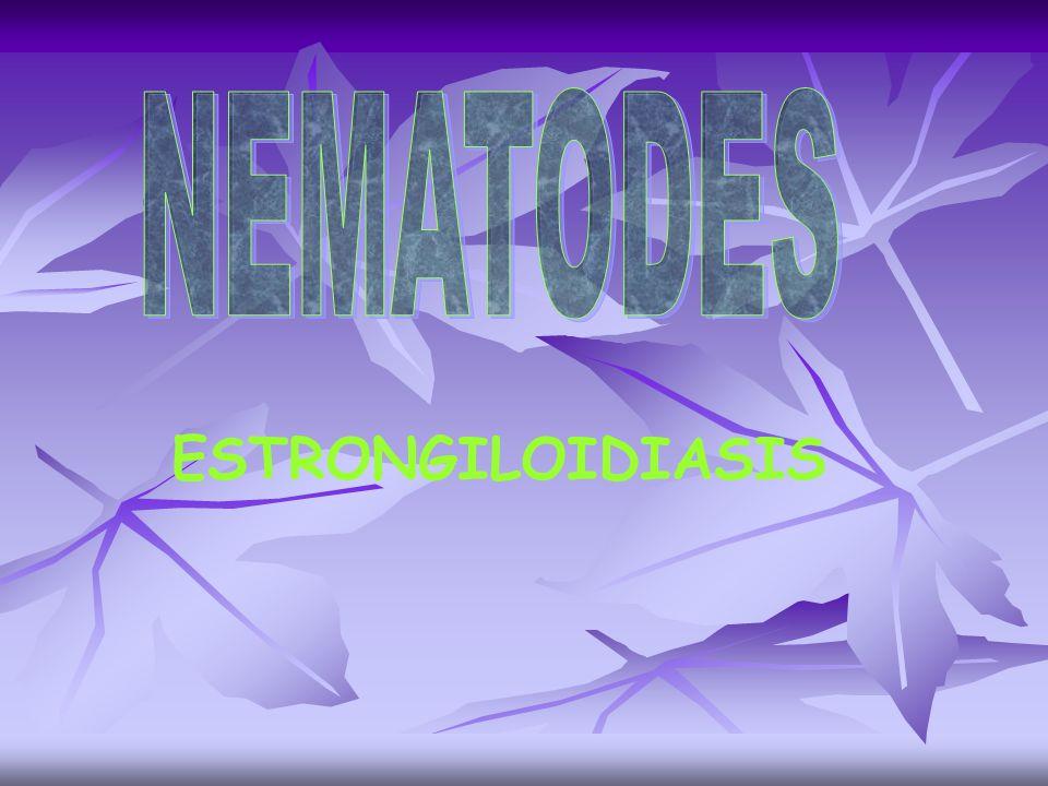 NEMATODES ESTRONGILOIDIASIS