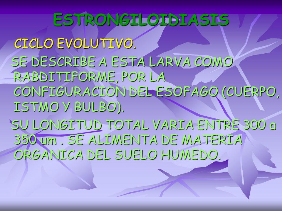 ESTRONGILOIDIASIS CICLO EVOLUTIVO.