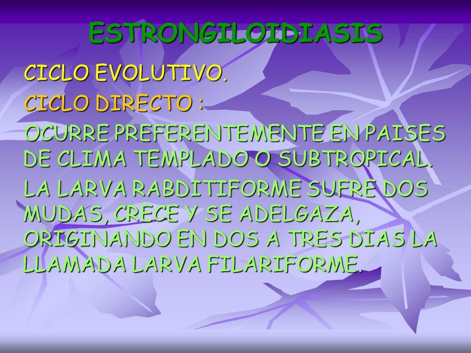 ESTRONGILOIDIASIS CICLO EVOLUTIVO. CICLO DIRECTO :