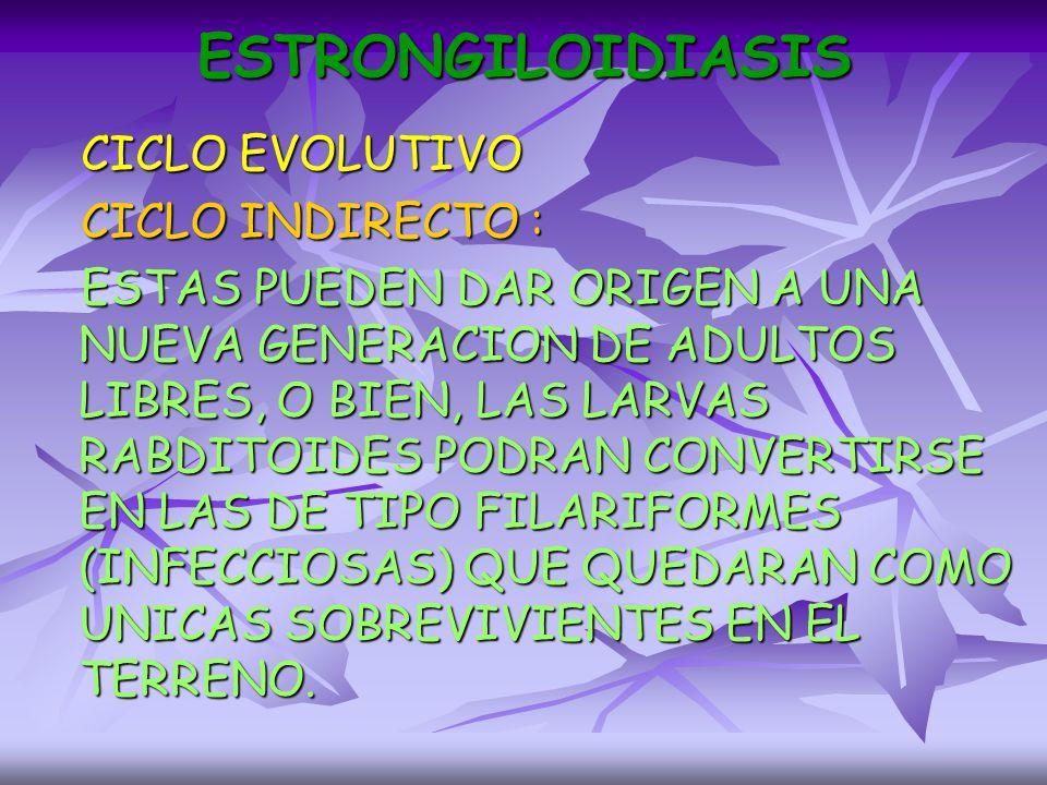 ESTRONGILOIDIASIS CICLO EVOLUTIVO CICLO INDIRECTO :