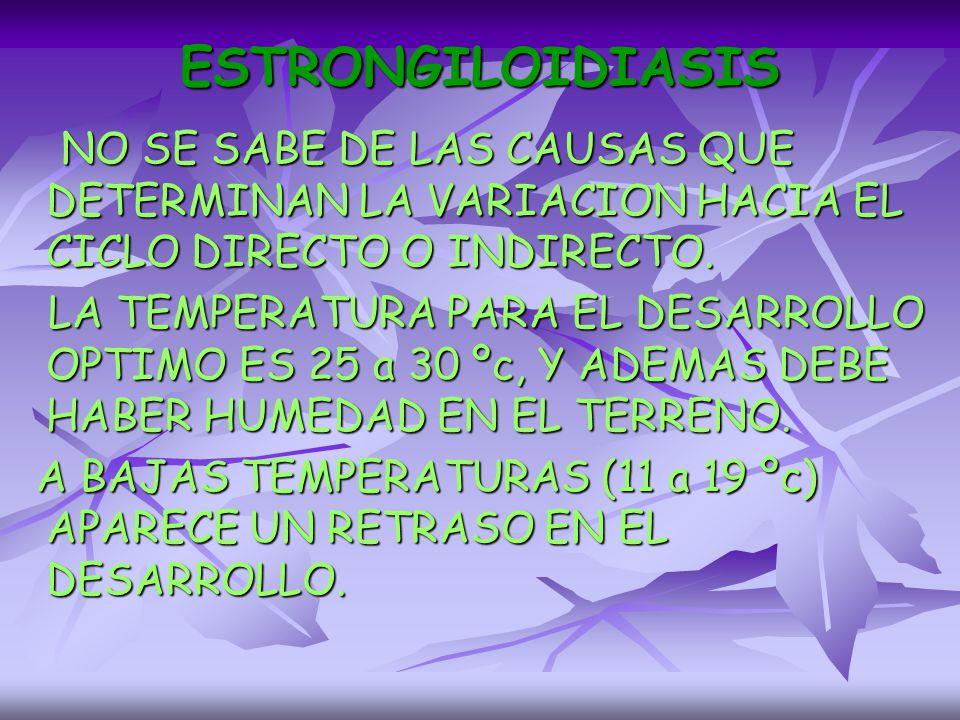 ESTRONGILOIDIASIS NO SE SABE DE LAS CAUSAS QUE DETERMINAN LA VARIACION HACIA EL CICLO DIRECTO O INDIRECTO.