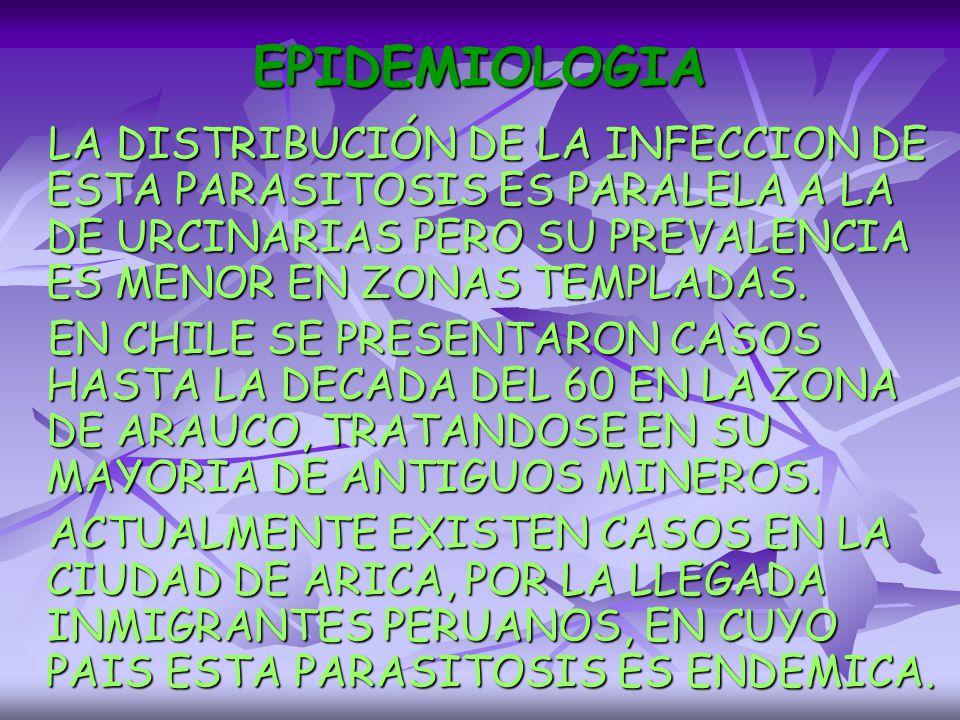 EPIDEMIOLOGIA LA DISTRIBUCIÓN DE LA INFECCION DE ESTA PARASITOSIS ES PARALELA A LA DE URCINARIAS PERO SU PREVALENCIA ES MENOR EN ZONAS TEMPLADAS.