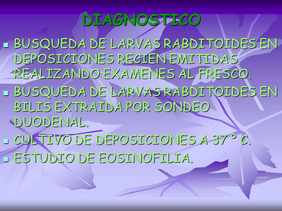 DIAGNOSTICO BUSQUEDA DE LARVAS RABDITOIDES EN DEPOSICIONES RECIEN EMITIDAS REALIZANDO EXAMENES AL FRESCO.
