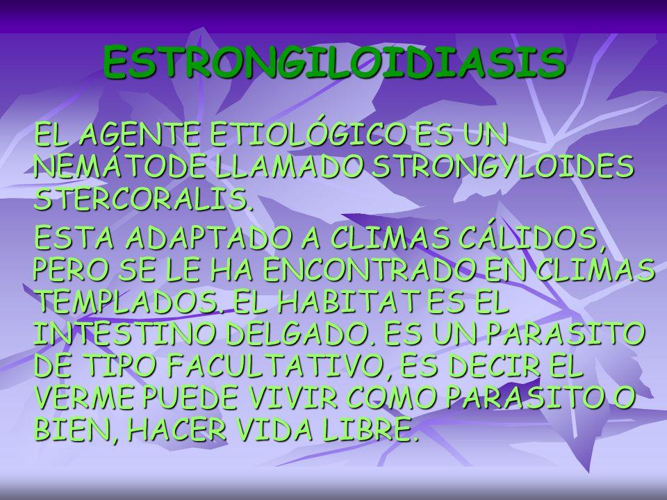 ESTRONGILOIDIASIS EL AGENTE ETIOLÓGICO ES UN NEMÁTODE LLAMADO STRONGYLOIDES STERCORALIS.