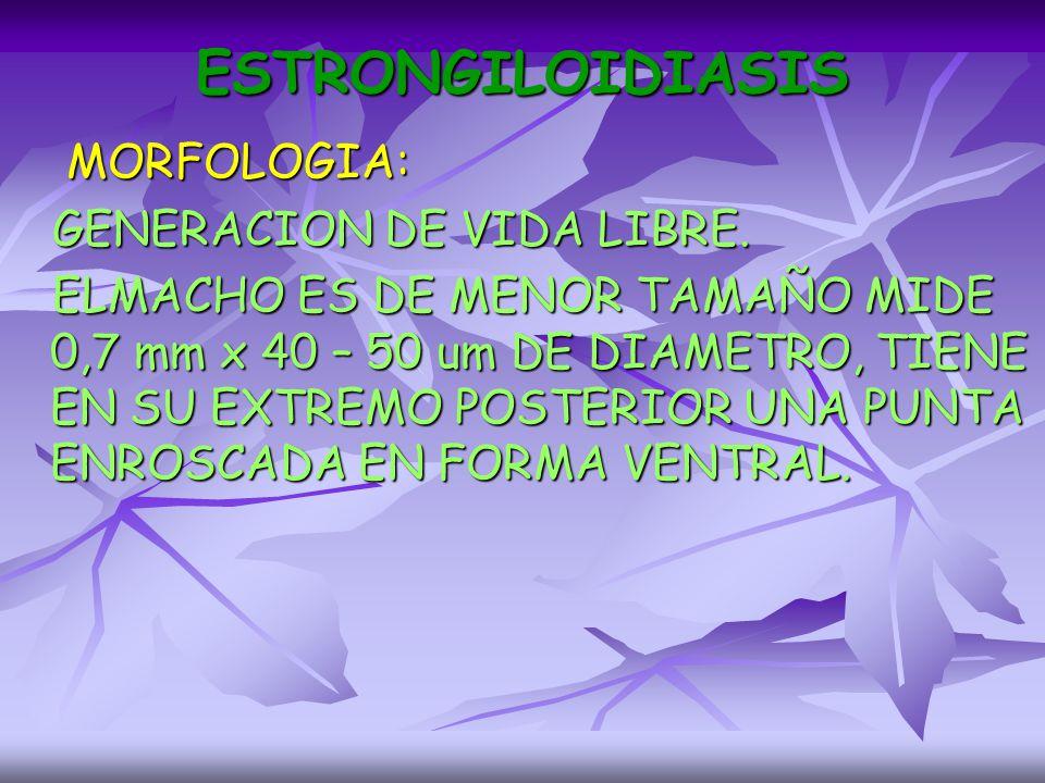 ESTRONGILOIDIASIS MORFOLOGIA: GENERACION DE VIDA LIBRE.