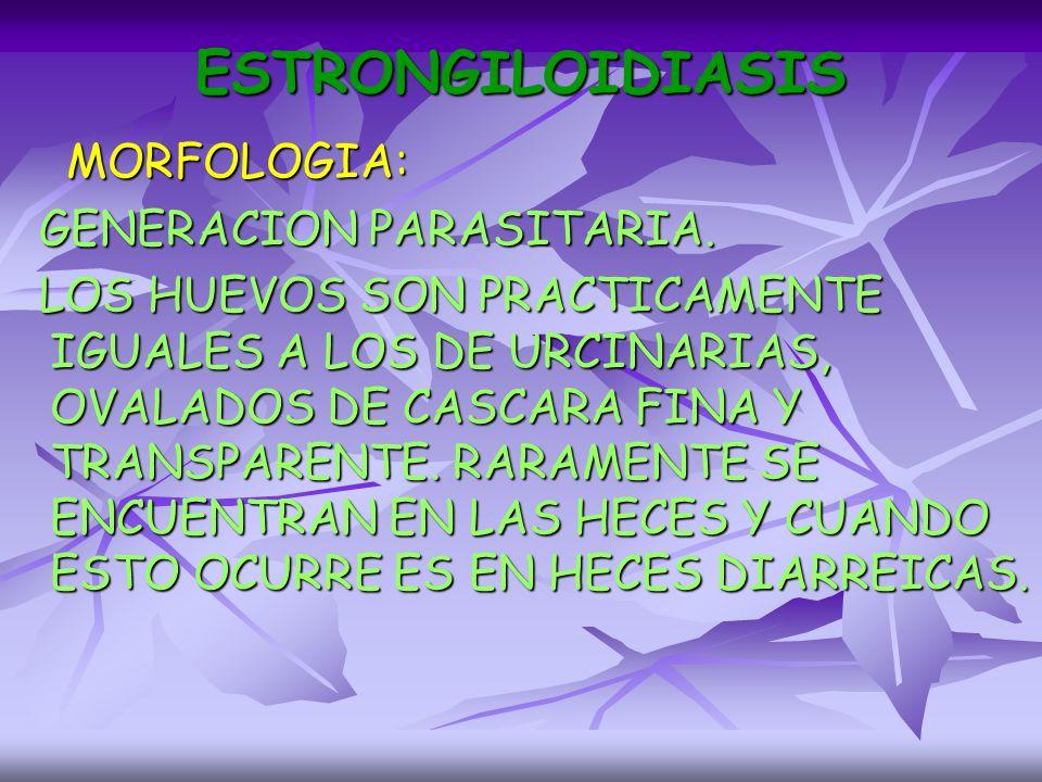 ESTRONGILOIDIASIS MORFOLOGIA: GENERACION PARASITARIA.