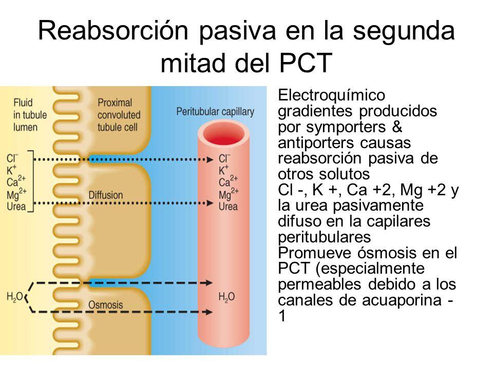Único Anatomía Y Fisiología De Mitad De Período 2 Become Bosquejo ...