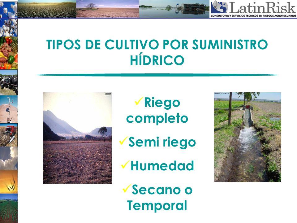 TIPOS DE CULTIVO POR SUMINISTRO HÍDRICO