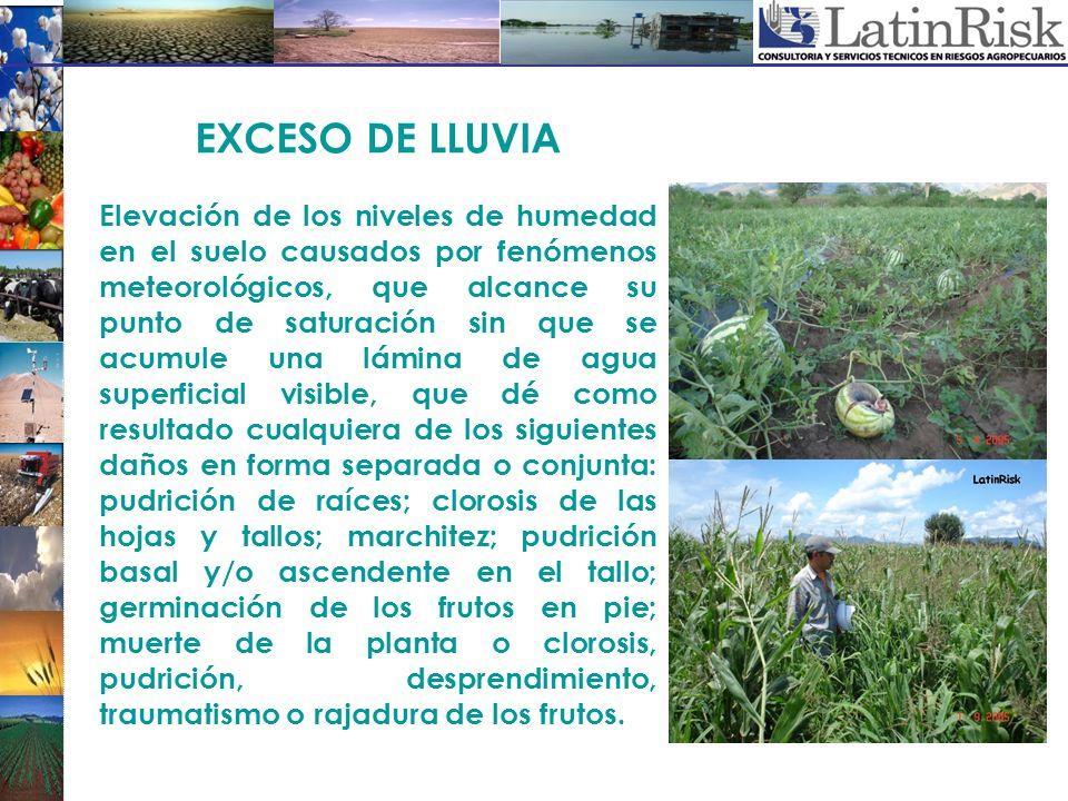 EXCESO DE LLUVIA