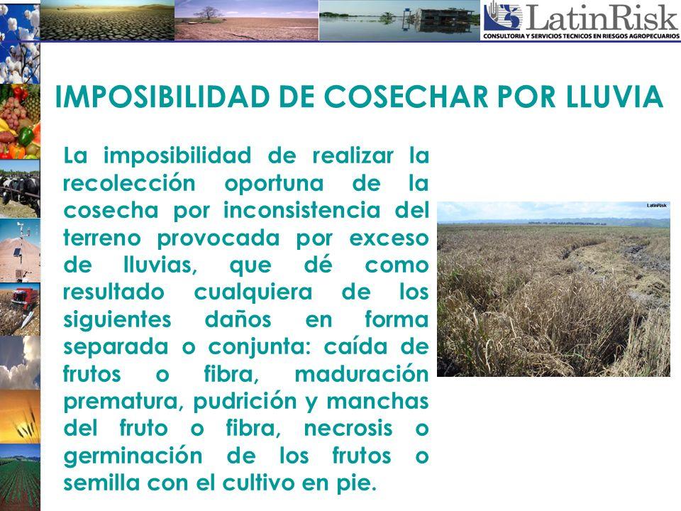 IMPOSIBILIDAD DE COSECHAR POR LLUVIA