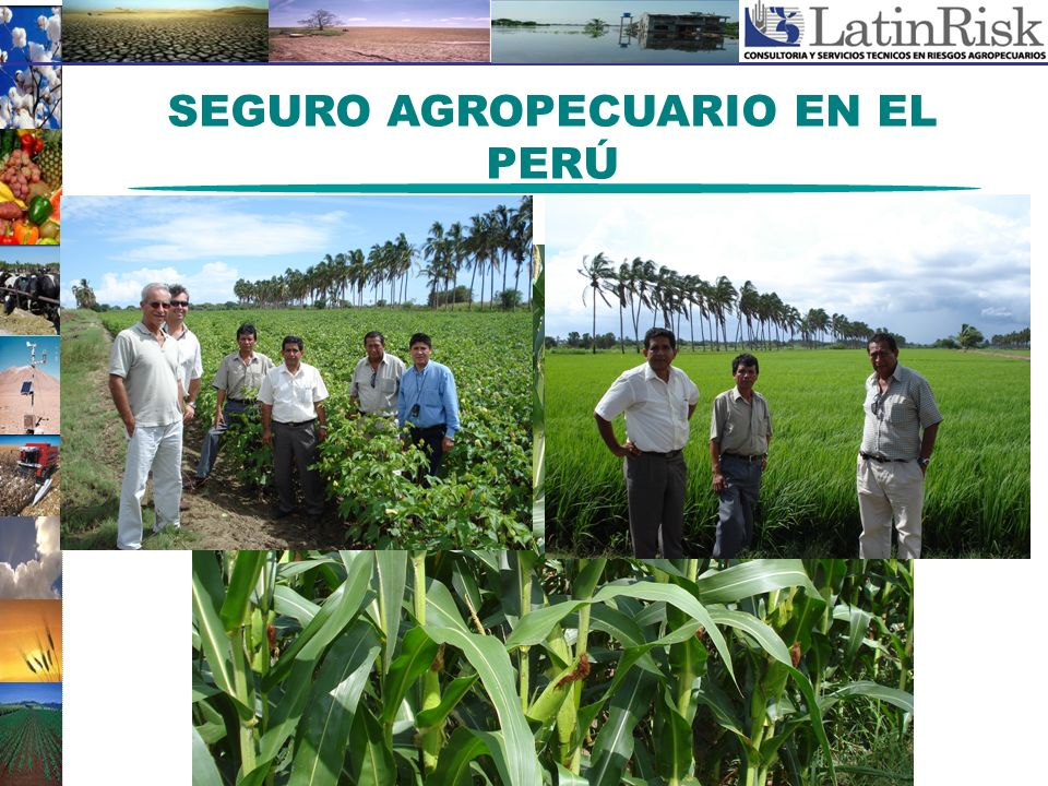 SEGURO AGROPECUARIO EN EL PERÚ
