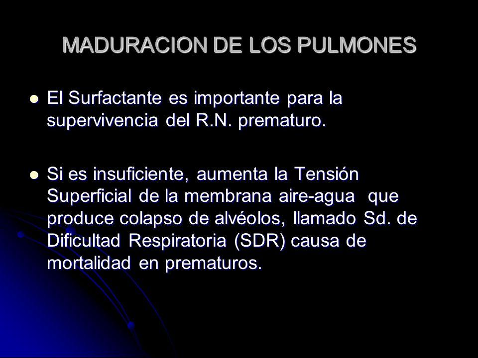 MADURACION DE LOS PULMONES