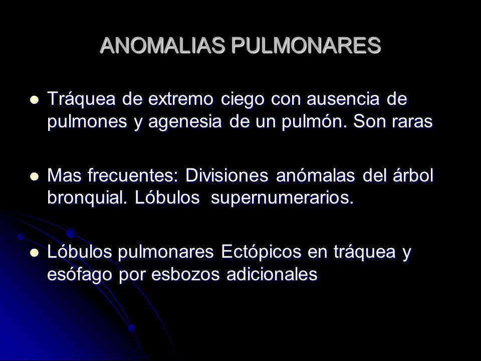 ANOMALIAS PULMONARES Tráquea de extremo ciego con ausencia de pulmones y agenesia de un pulmón. Son raras.