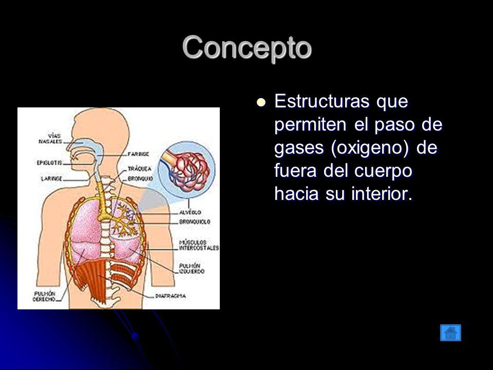 Concepto Estructuras que permiten el paso de gases (oxigeno) de fuera del cuerpo hacia su interior.