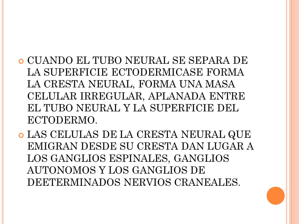 CUANDO EL TUBO NEURAL SE SEPARA DE LA SUPERFICIE ECTODERMICASE FORMA LA CRESTA NEURAL, FORMA UNA MASA CELULAR IRREGULAR, APLANADA ENTRE EL TUBO NEURAL Y LA SUPERFICIE DEL ECTODERMO.