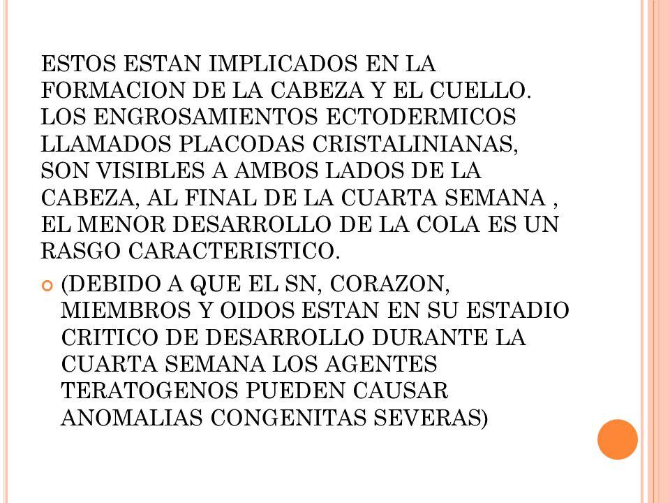 ESTOS ESTAN IMPLICADOS EN LA FORMACION DE LA CABEZA Y EL CUELLO