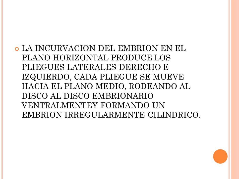 LA INCURVACION DEL EMBRION EN EL PLANO HORIZONTAL PRODUCE LOS PLIEGUES LATERALES DERECHO E IZQUIERDO, CADA PLIEGUE SE MUEVE HACIA EL PLANO MEDIO, RODEANDO AL DISCO AL DISCO EMBRIONARIO VENTRALMENTEY FORMANDO UN EMBRION IRREGULARMENTE CILINDRICO.