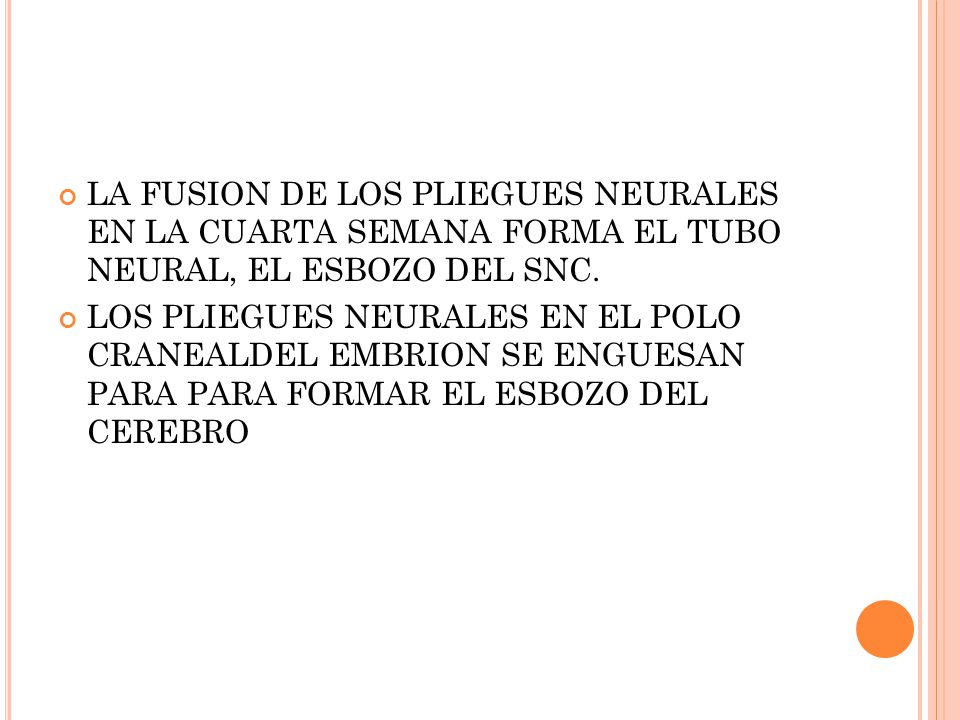 LA FUSION DE LOS PLIEGUES NEURALES EN LA CUARTA SEMANA FORMA EL TUBO NEURAL, EL ESBOZO DEL SNC.