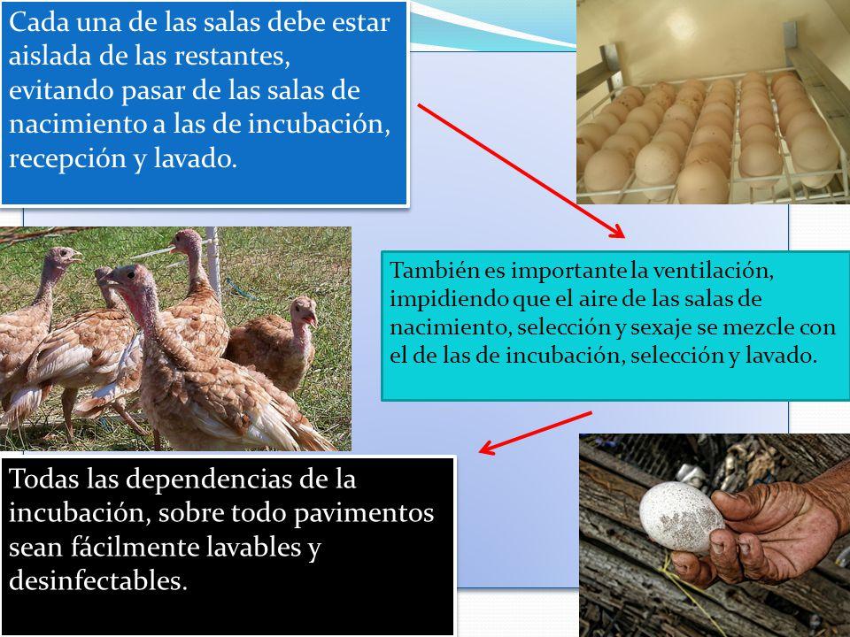 Cada una de las salas debe estar aislada de las restantes, evitando pasar de las salas de nacimiento a las de incubación, recepción y lavado.
