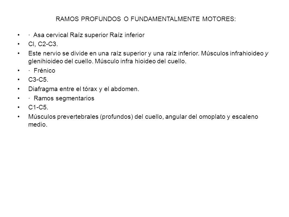 RAMOS PROFUNDOS O FUNDAMENTALMENTE MOTORES: