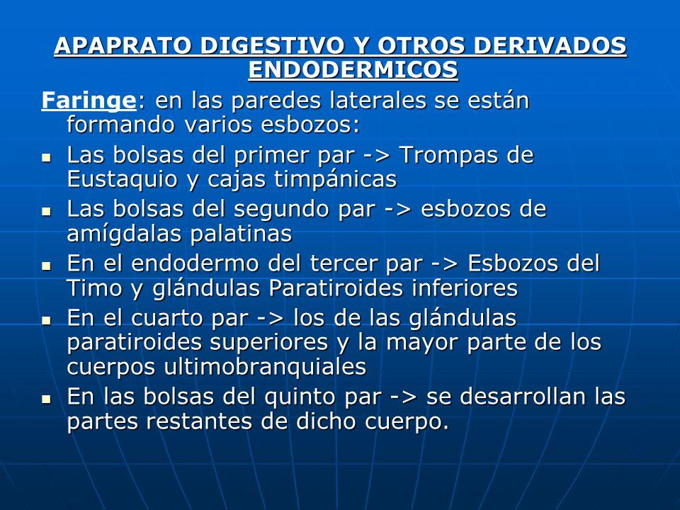 APAPRATO DIGESTIVO Y OTROS DERIVADOS ENDODERMICOS
