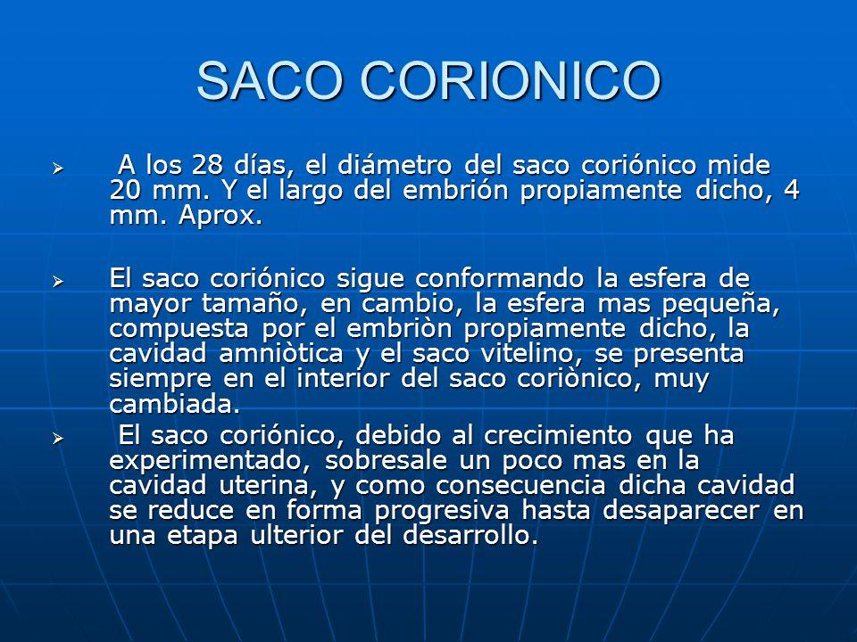 SACO CORIONICO A los 28 días, el diámetro del saco coriónico mide 20 mm. Y el largo del embrión propiamente dicho, 4 mm. Aprox.