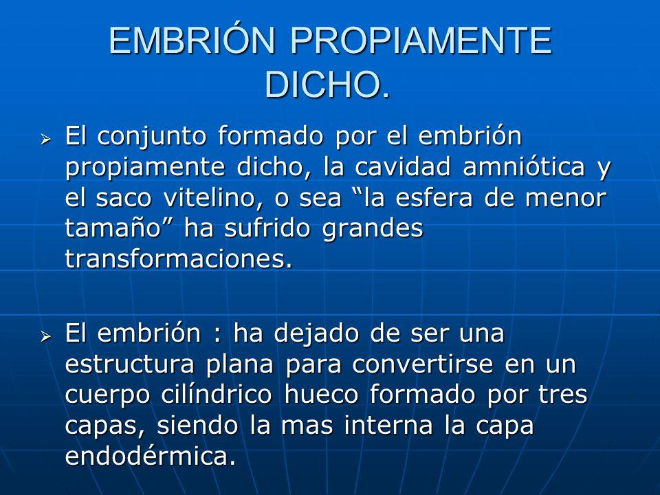EMBRIÓN PROPIAMENTE DICHO.