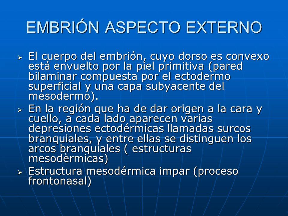 EMBRIÓN ASPECTO EXTERNO