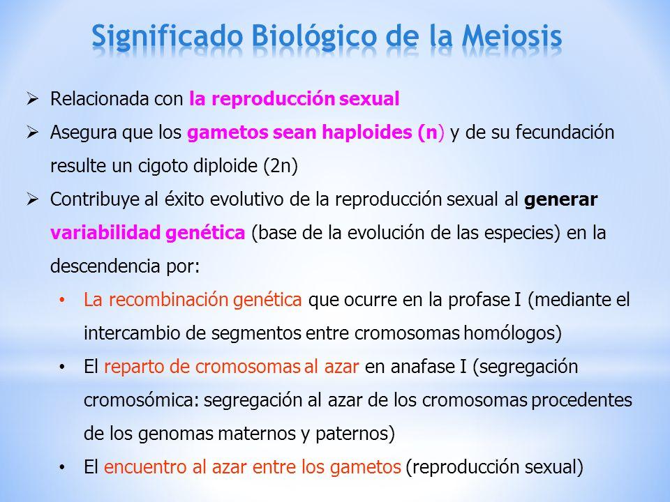 Significado Biológico de la Meiosis