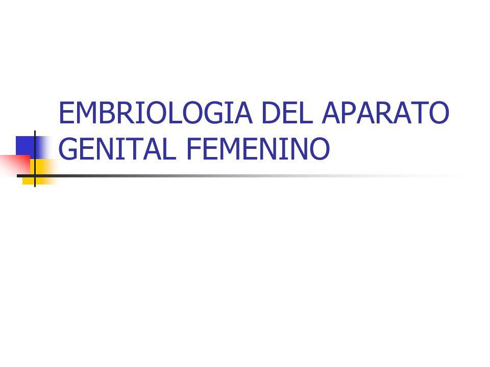 EMBRIOLOGIA DEL APARATO GENITAL FEMENINO