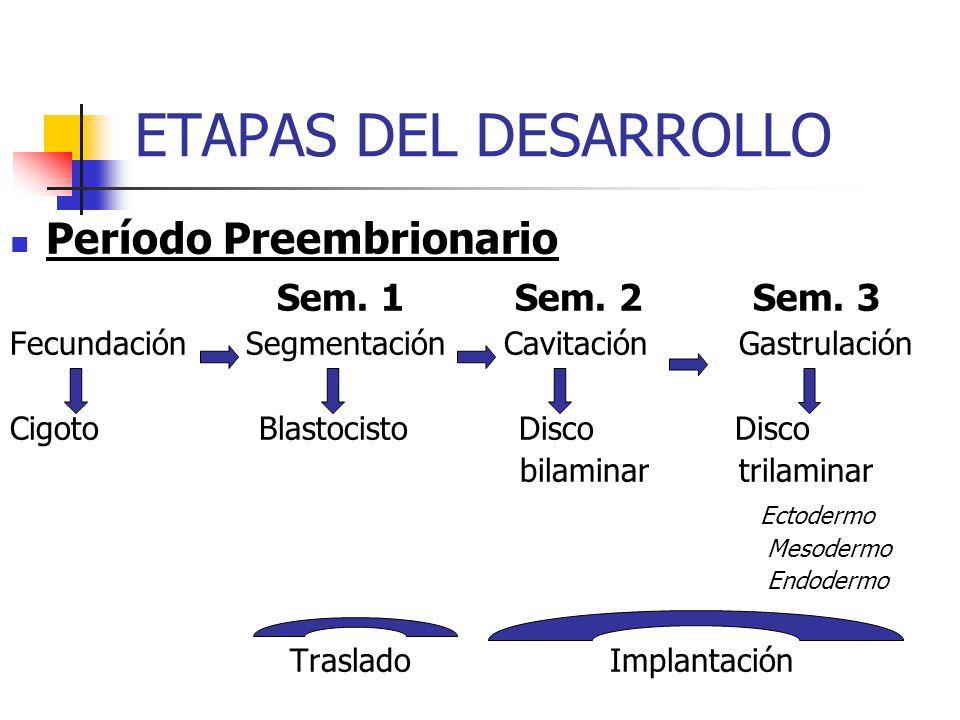 ETAPAS DEL DESARROLLO Período Preembrionario Sem. 1 Sem. 2 Sem. 3