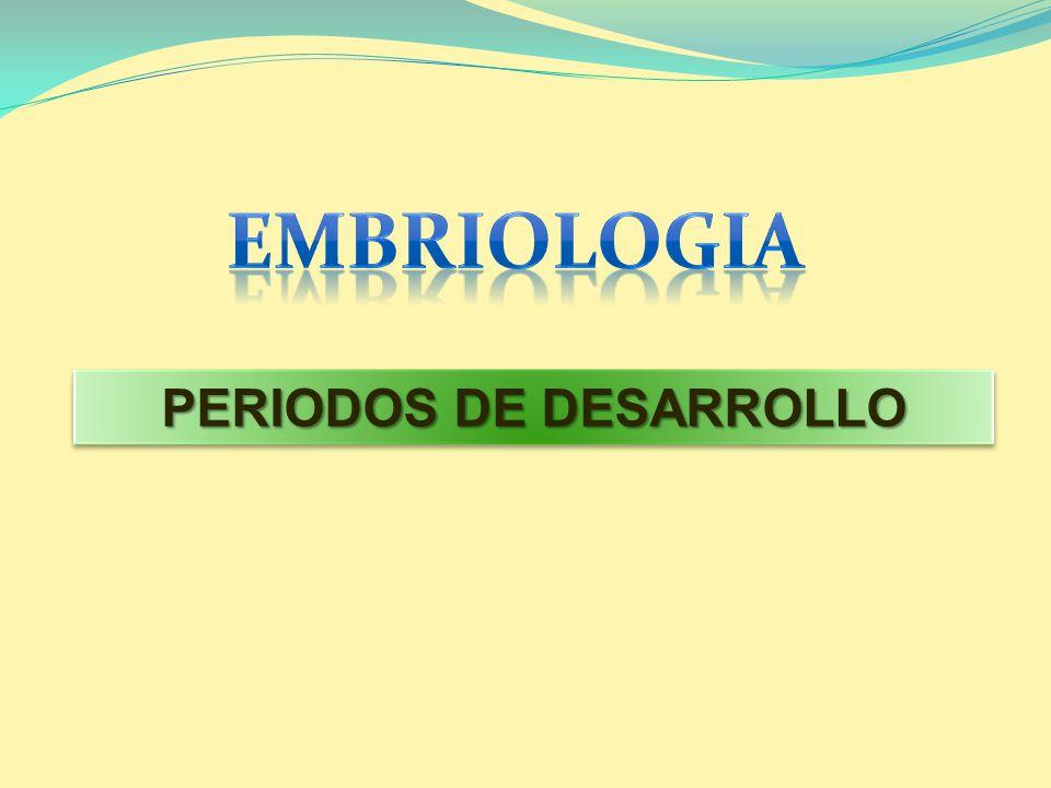 PERIODOS DE DESARROLLO