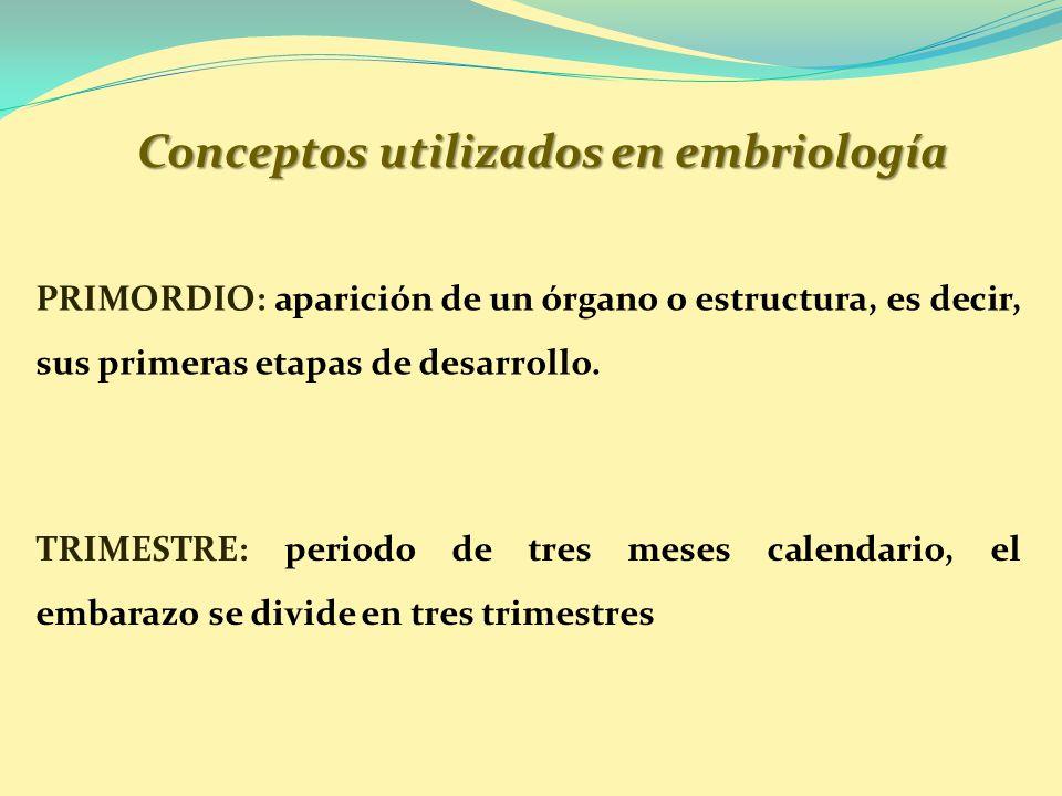 Conceptos utilizados en embriología