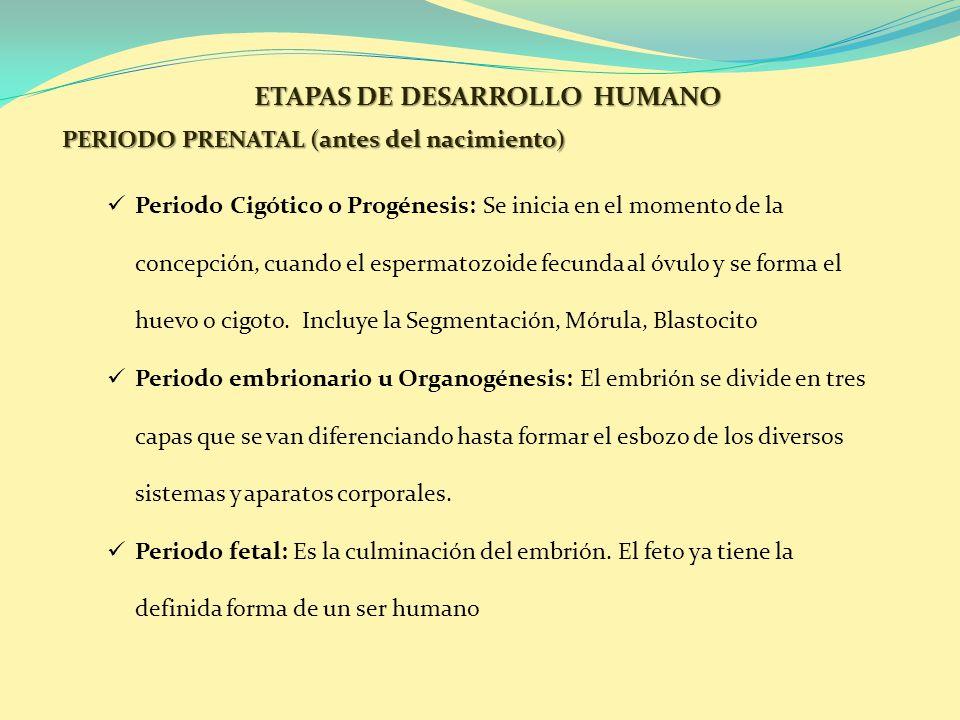 ETAPAS DE DESARROLLO HUMANO